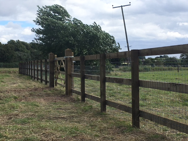 Horse fencing at Magdalene