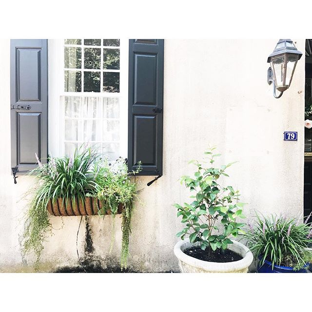 Monday's aren't so bad when your view looks like this 💙 . . . #abitofcharleston #charleston #explorecharleston #charlestonscenes #chstoday #housebeautiful #windowboxesofcharleston #windowbox #windowboxwednesday #chs #southernliving #southernlivingmag #charlestonphotographer #charlestonlife