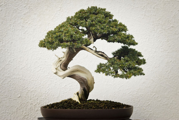 how to make bonsai tree at home in marathi