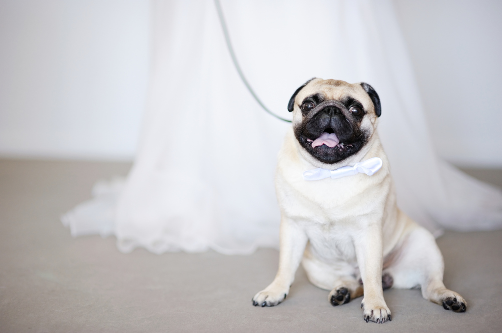 wedding-dog.jpg