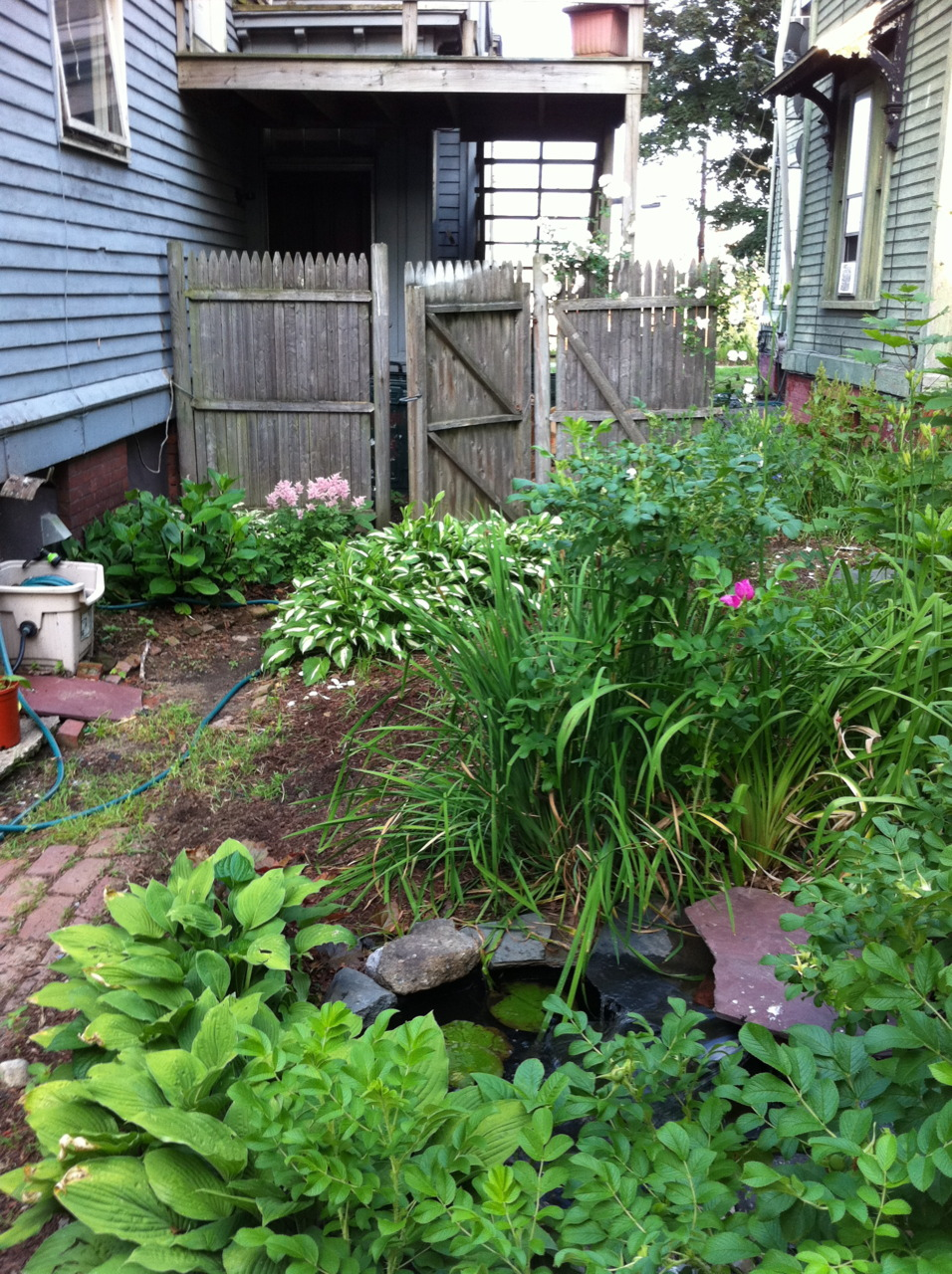 "Tiny pond. ""Benner"" lives here. Hostas, beach roses, tiger lilies. Back left corner is ""hosta & astilbe island,"" although there are also lilies of the valley tucked in there, and a shade hydrangea as well. False indigo beyond the beach roses, and at the back fence, climbing rose."