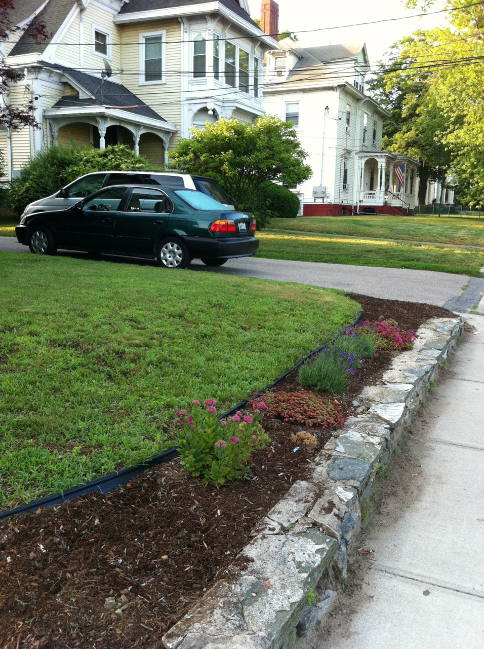Front garden bed - sedum, sempervivum, lavender
