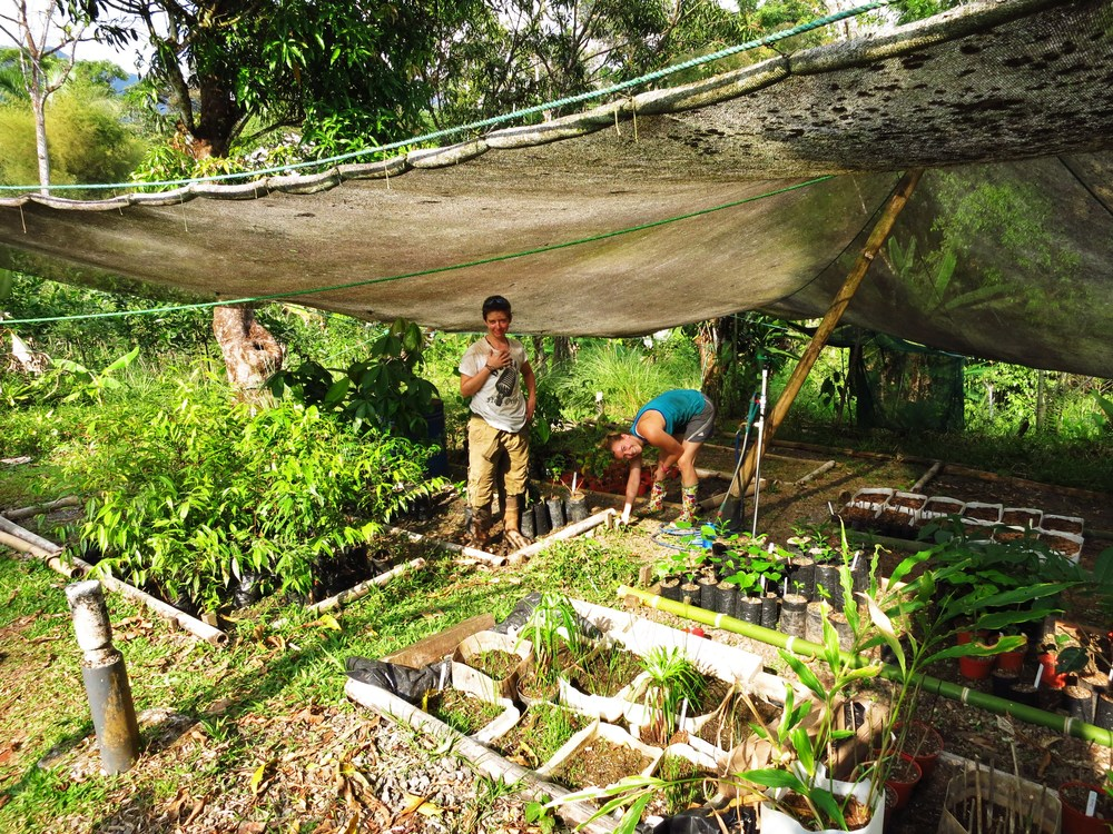 Permaculture Nursery Costa Rica