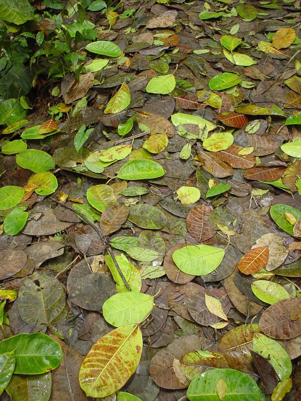 Leaf Trail.jpg
