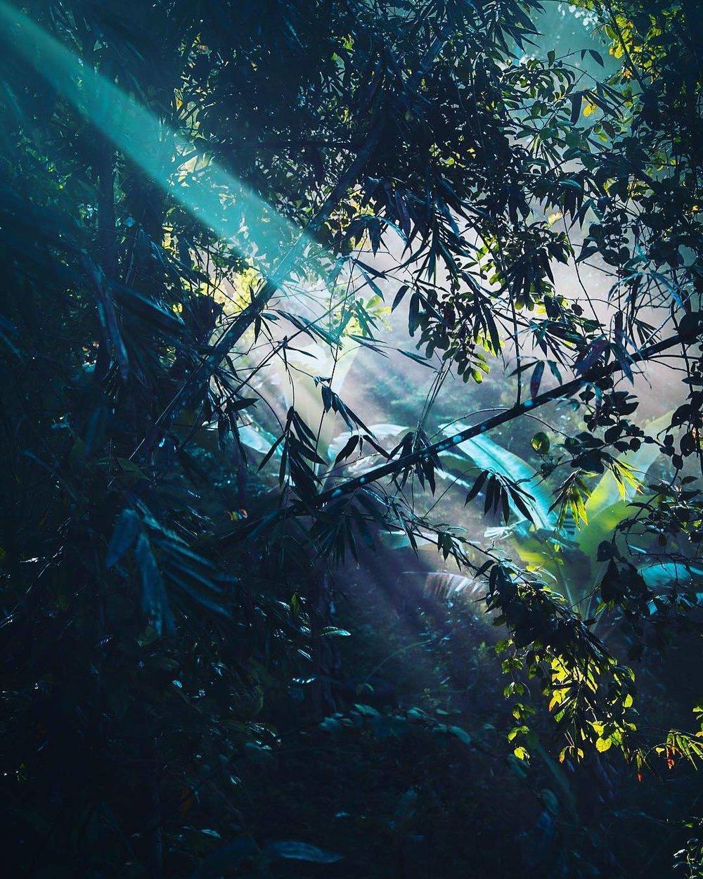 LightRainforest.jpg