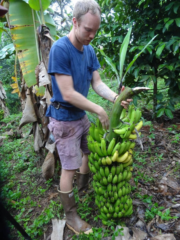 BananasConnor.jpg