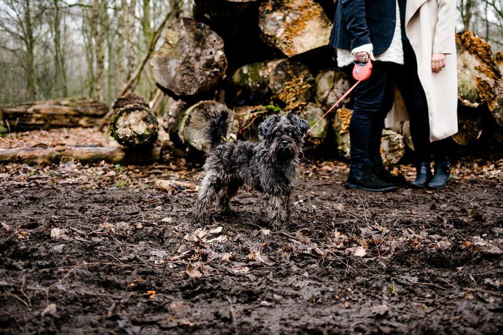 Dog on a woodlan pre wedding shoot