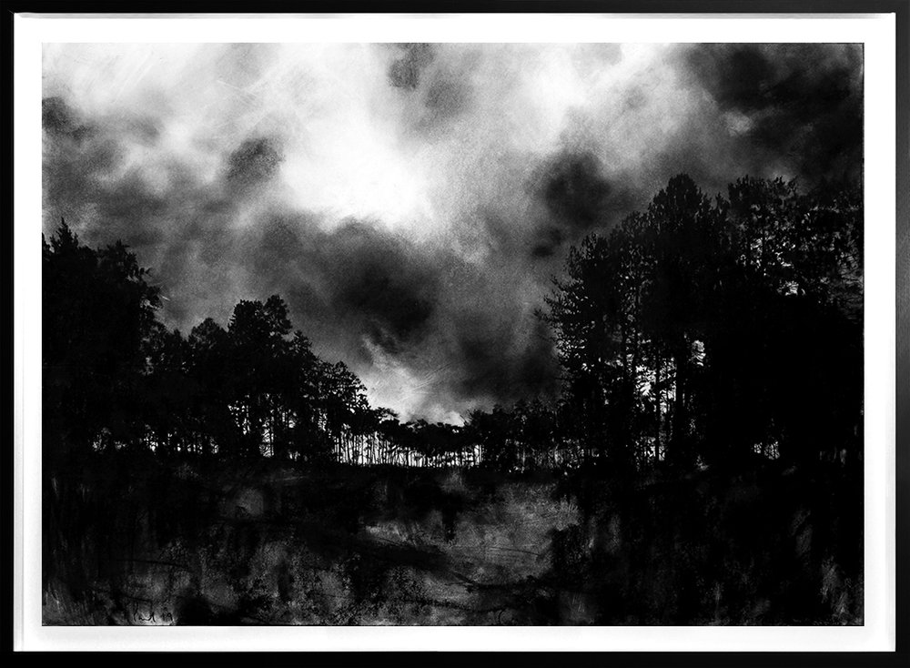 New Forest  2019 | 84 x 60cm Charcoal & compressed charcoal Signed on front POA