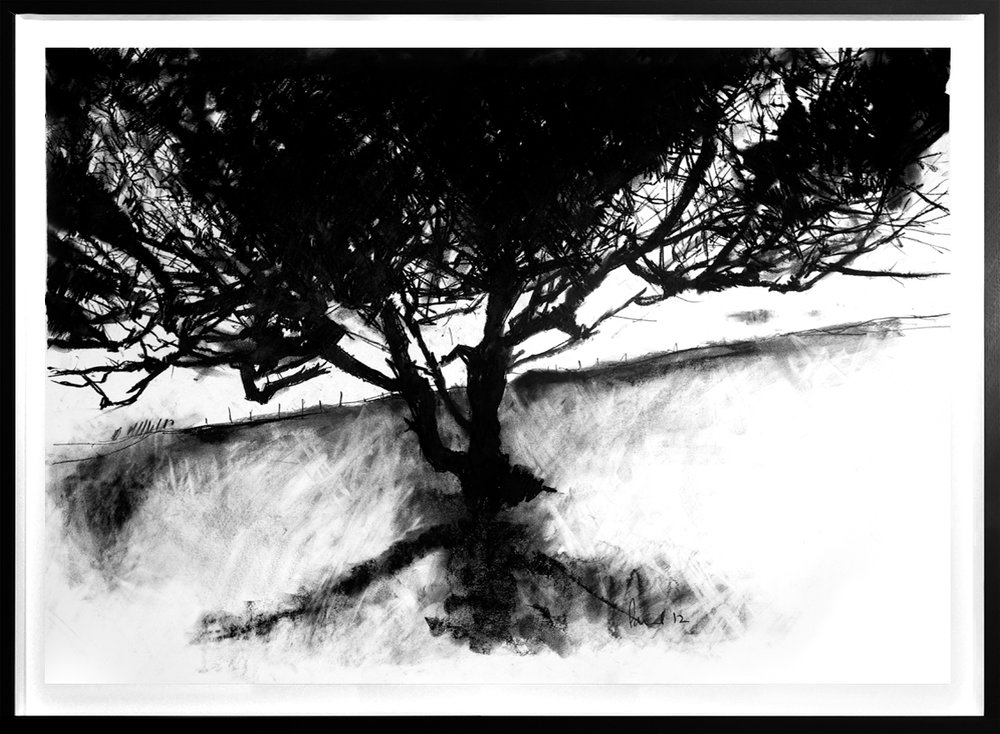 Lighting Tree, Golden Cap (or near)  2012 | 90 x 63cm Charcoal & compressed charcoal Signed  SOLD