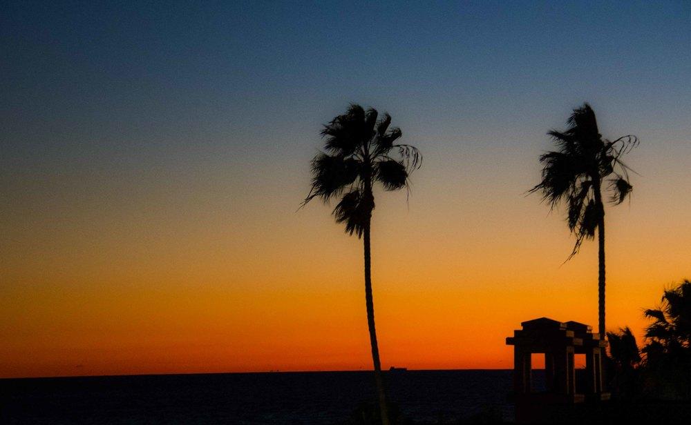 Palm Tree Photo.jpg