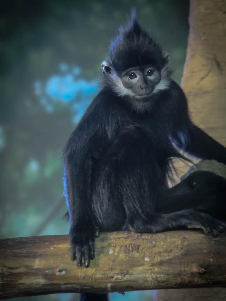 Monkey Photo.jpg