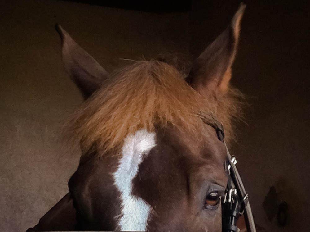 Horse Photo .jpg
