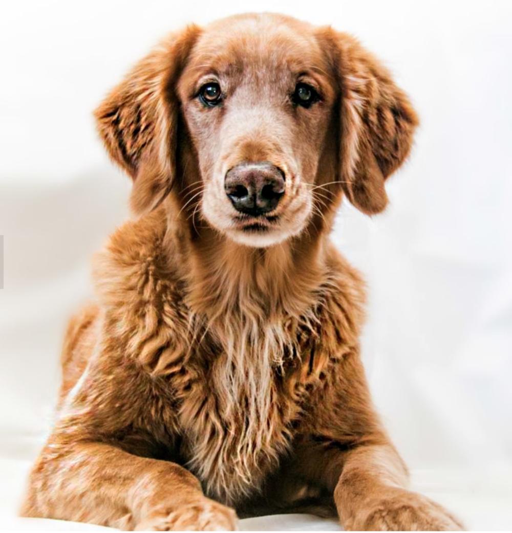 Bonphotage Pet Photography