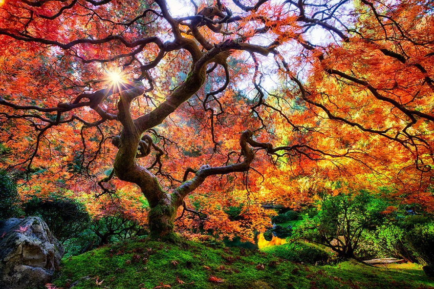(Dragon's Breath by Aaron Reed)