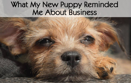 What My New Puppy Reminded Me About Business