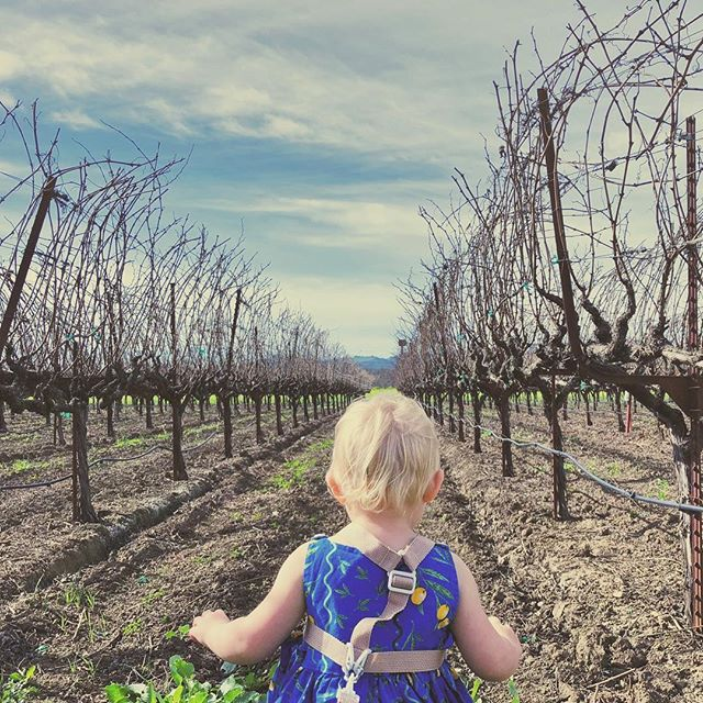 #kidinthevineyard #tolenaswinery #suisunvalley #fairfield #california