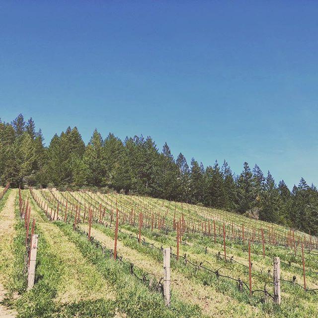 #porterbasswinery #guerneville #northcoast #california #natureart