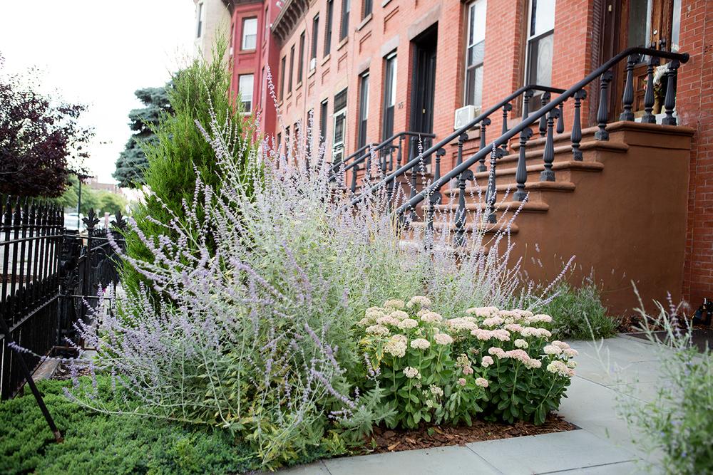 New-Eco-Landscapes-Bed-Stuy10-front-yard-Gardenista.jpg