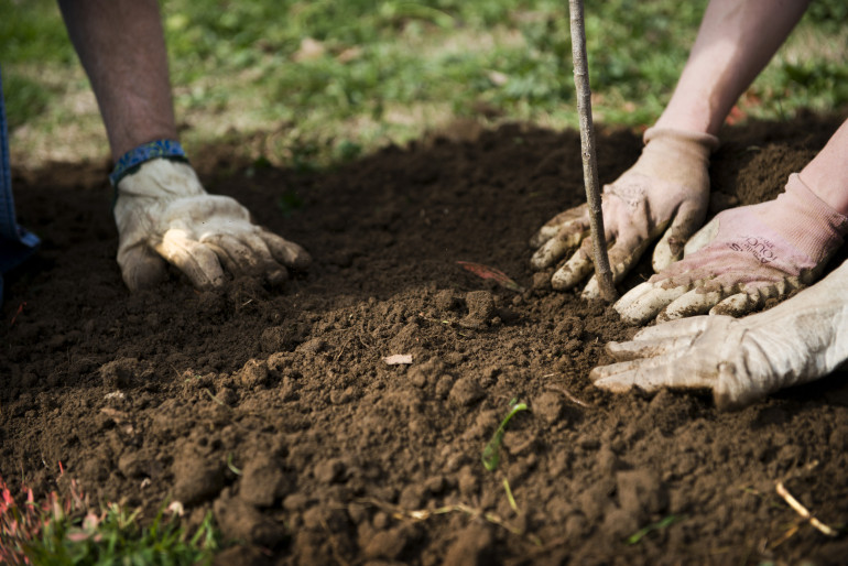 plant-trees1-e1444327498593.jpg
