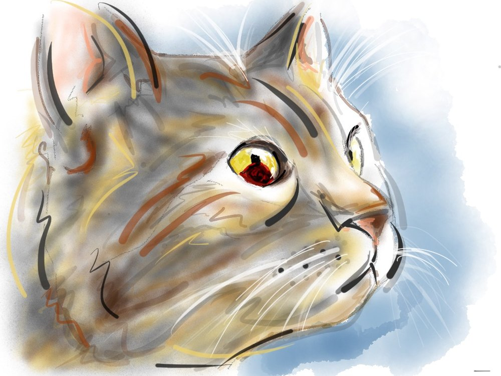 Illustration by Amanda Lauri, all rights reserved by DerekTheVet.com