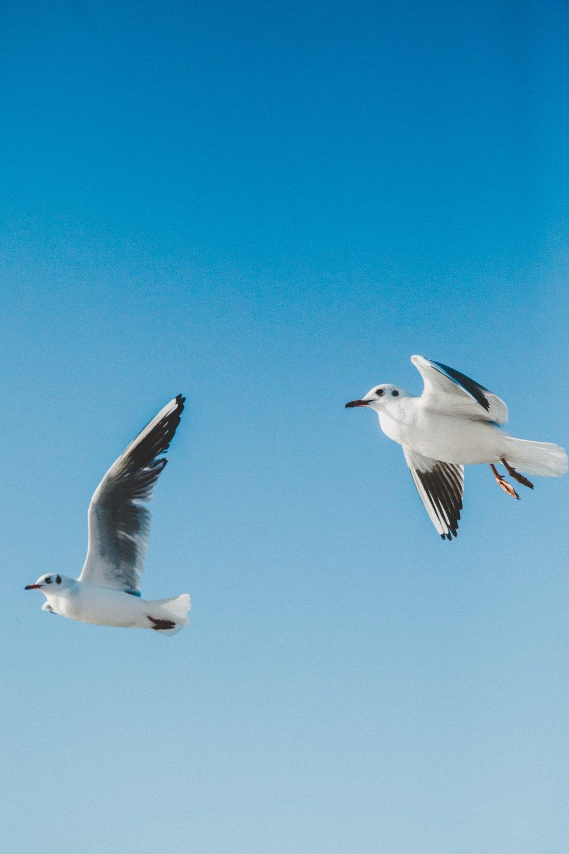 Photo by  hiva sharifi on  Unsplash