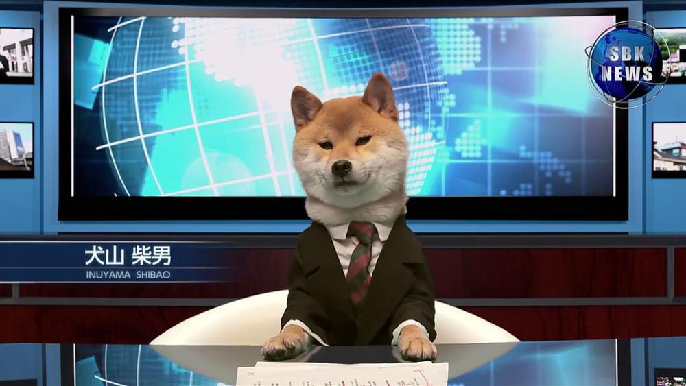 News Dog.png