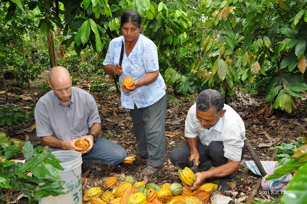 Don Fortunato (far right) harvest Pure Nacional cocoa pods on his family farm in Peru.