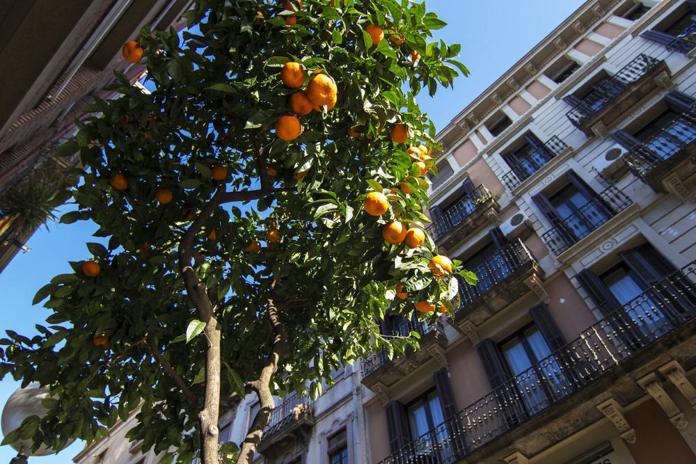 Gracia Orange.jpg