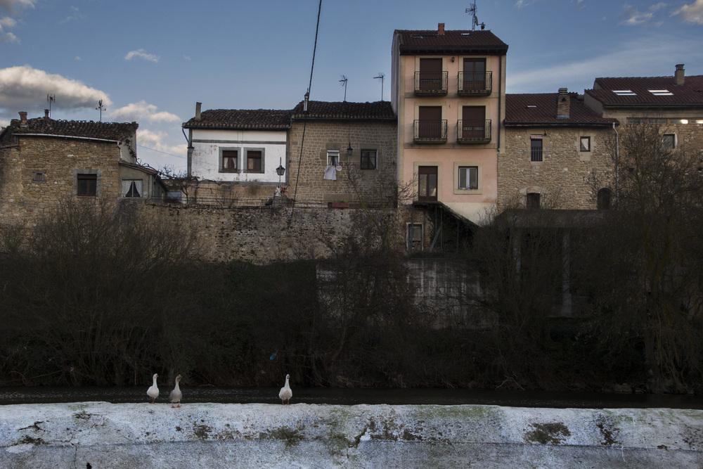 Basque Geese.jpg