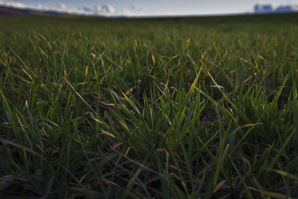 Basque Grass.jpg