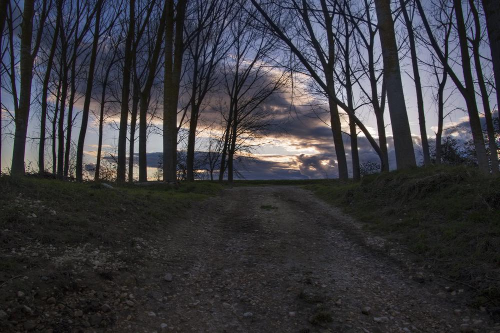 basque tree sunset.jpg