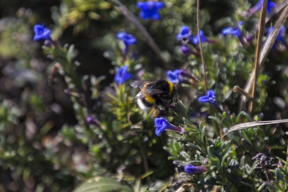 Bilbao Bee.jpg