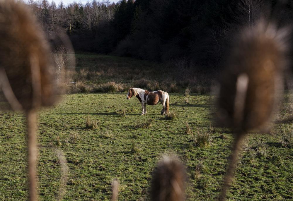 Close Basque Pony.jpg