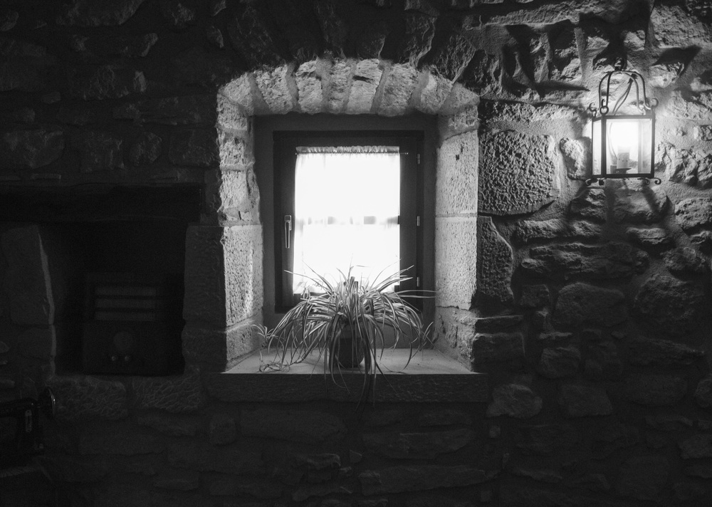 Basque Window Plant BW.jpg