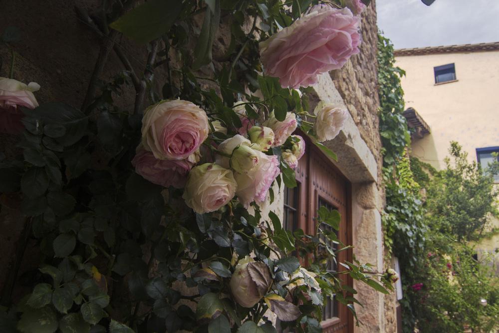 Casavells roses.jpg
