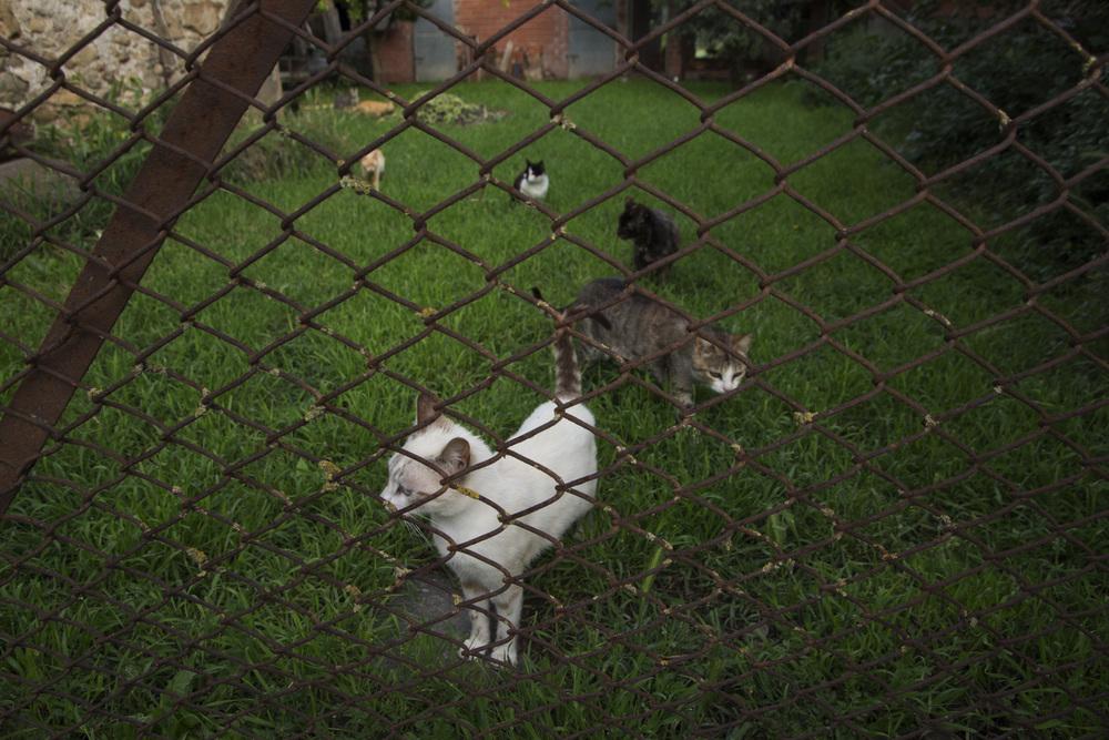 Casavells Kittens.jpg