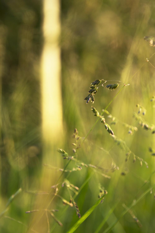 Dormans-River seeds2.jpg
