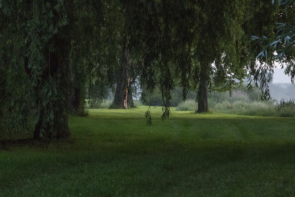 Dormans-River Willows.jpg