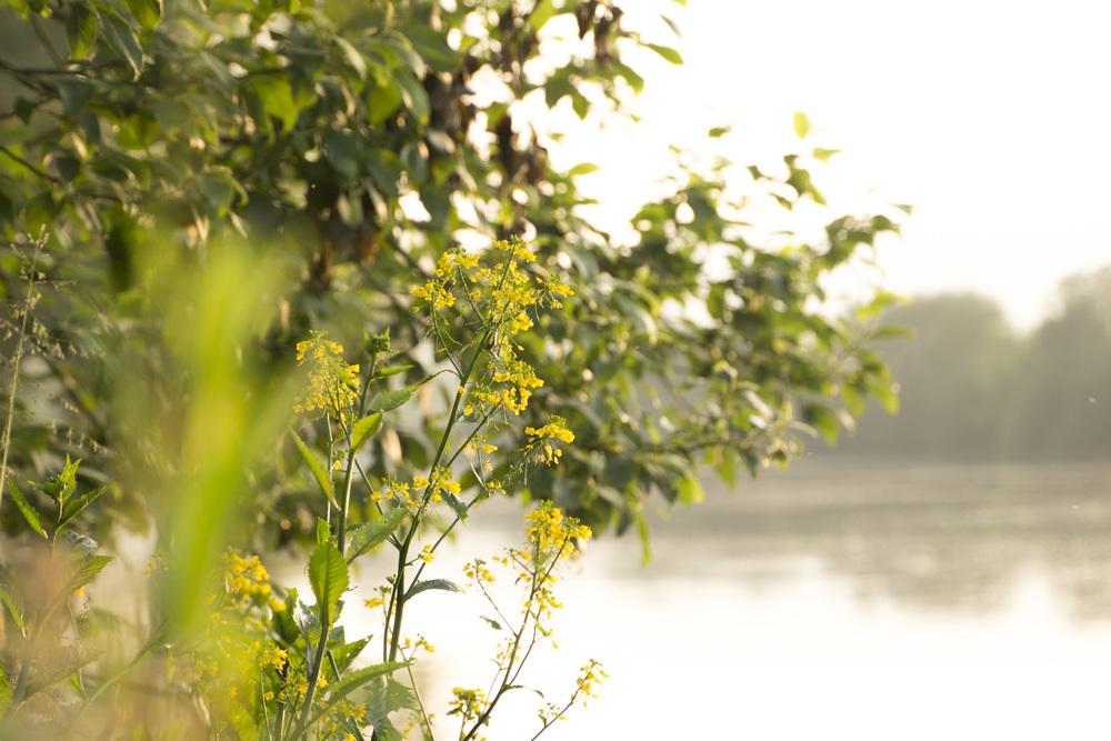 Dormans-River flower.jpg