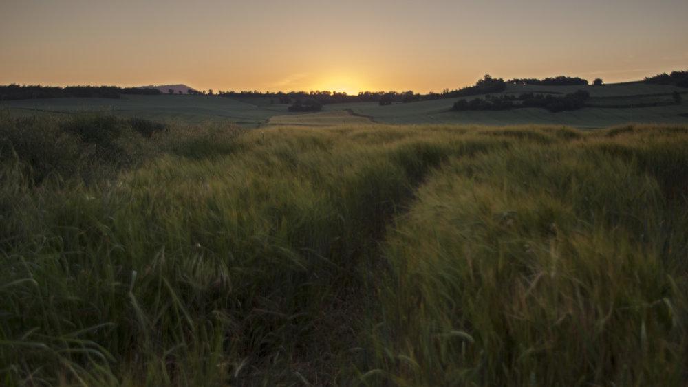 Pueblo Arganzon- Blowing grass.jpg