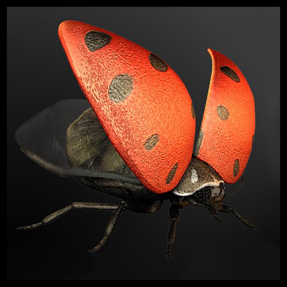 Ladybug_01.png