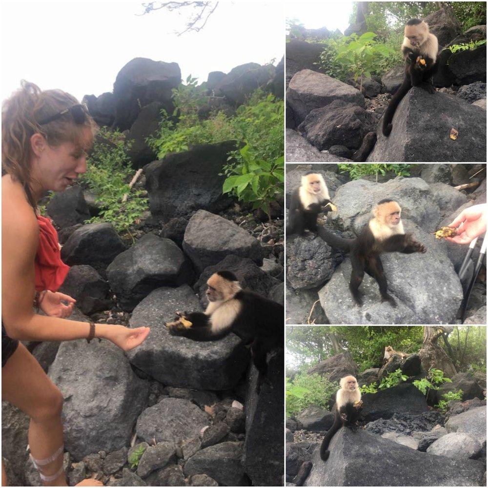 Feeding on Monkey Island, Ometepe