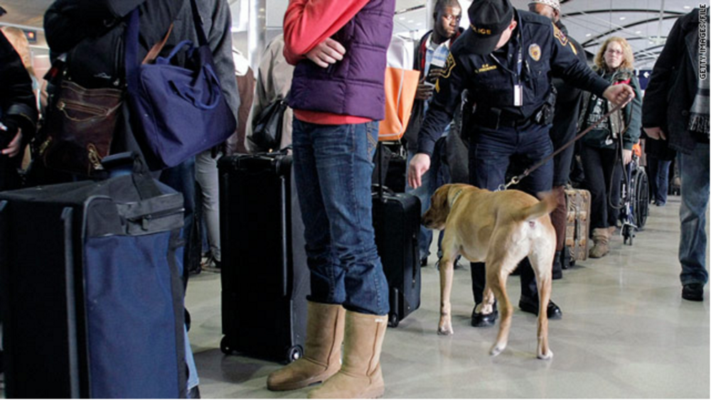 """Spencer, a bomb-sniffing dog, checks a suitcase at the airport."" - CNN"