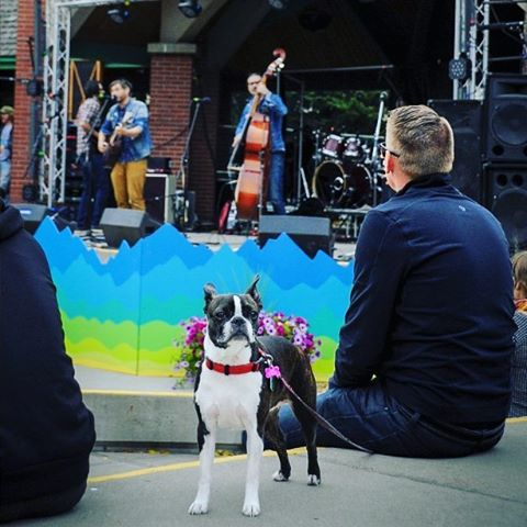 Dog poses while enjoying Ryland Moranz and band at L&R2016 #Lethbridge #CKXU #IFoundItDowntown #LoveAndRecords #yql #instadog #musicfestivalfordogs #recordfair