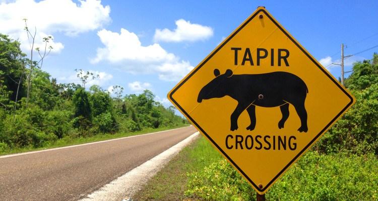 tapircrossing-750x400[1].jpg