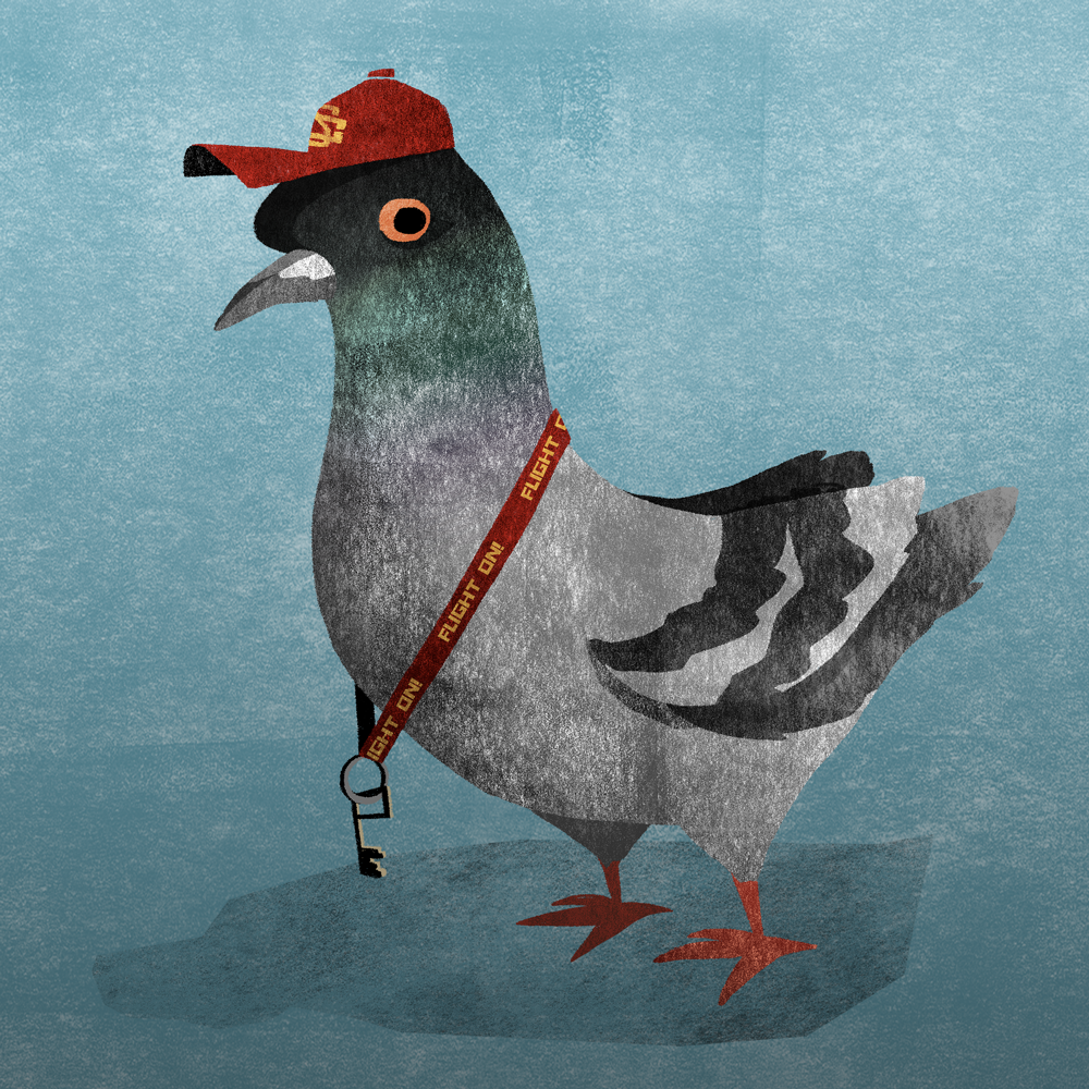 USC Pigeon