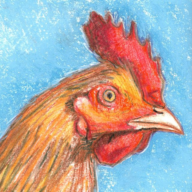 A Wicked Chicken  #chickens #goodmorning #illustration #chicken #farm #breakfast #drawing #pastel #color #animaldrawing #chick #birds #bird #rooster #hen #art #portrait