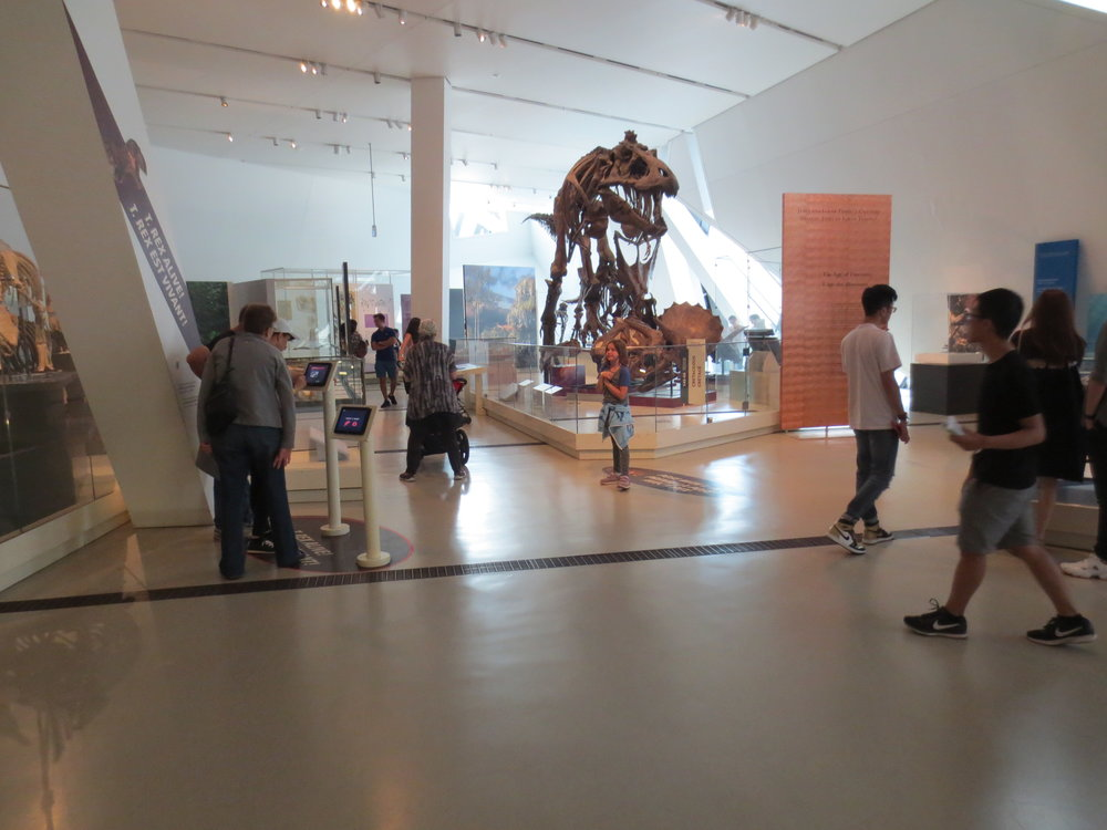 Picture of the dinosaur exhibit on the second floor with wide pathways