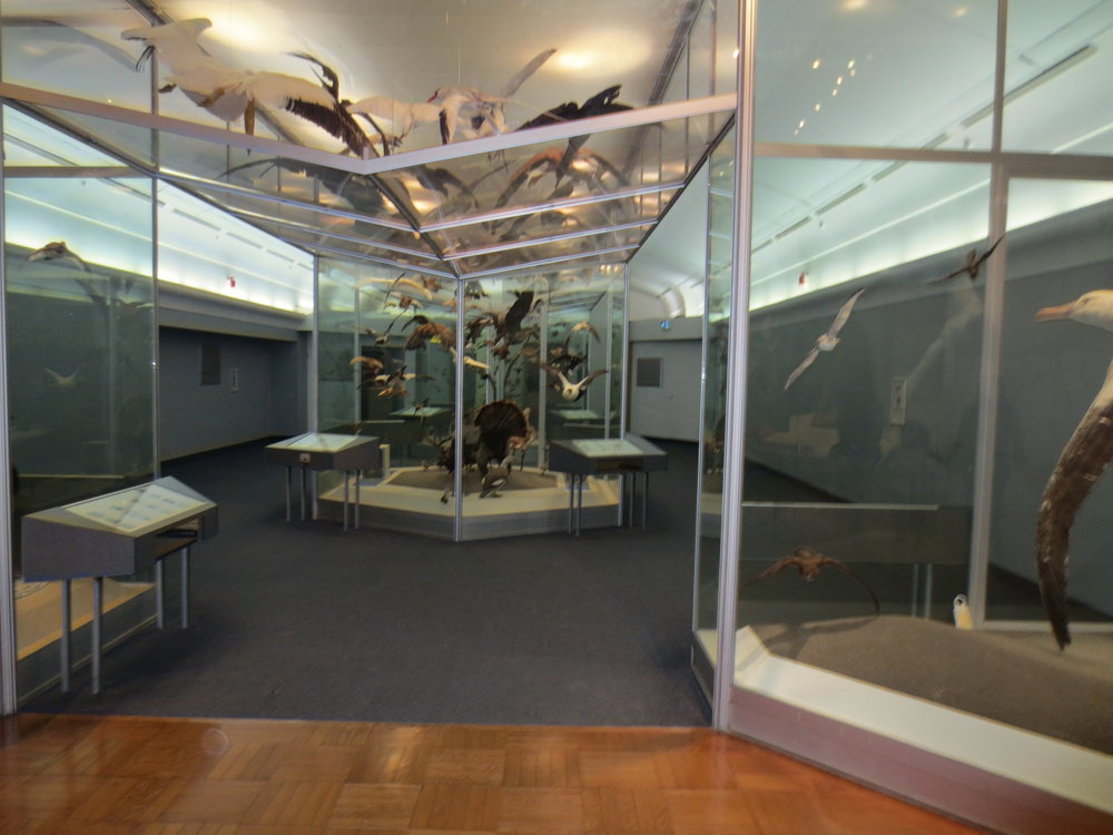 Picture of bird exhibit at the Royal Ontario Museum with contrast panels
