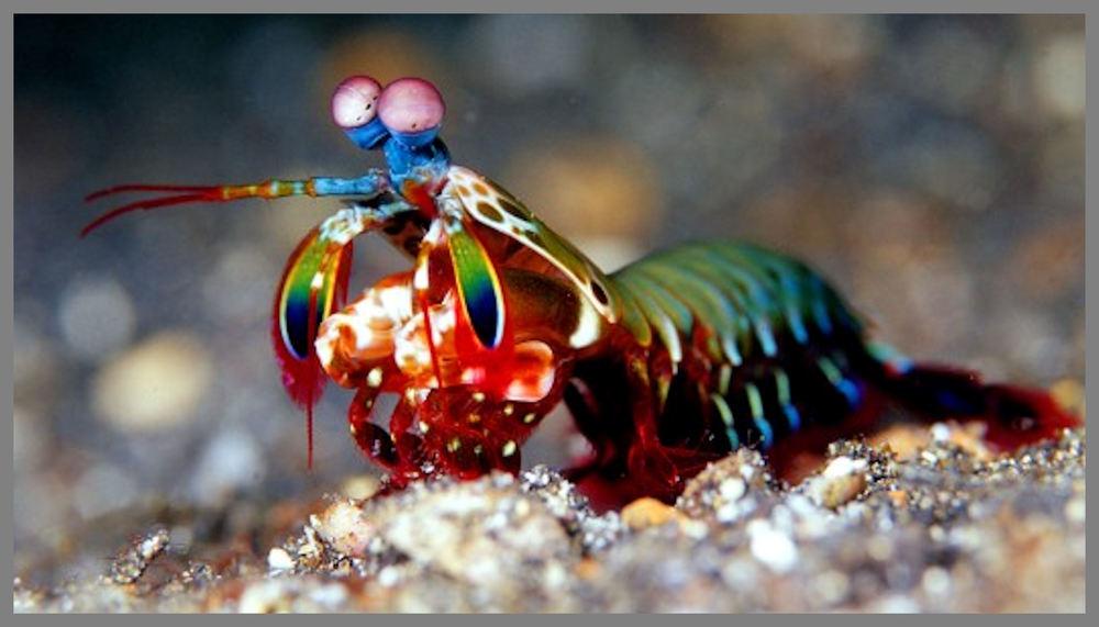 A shrimp maybe, but definitely not a bird.